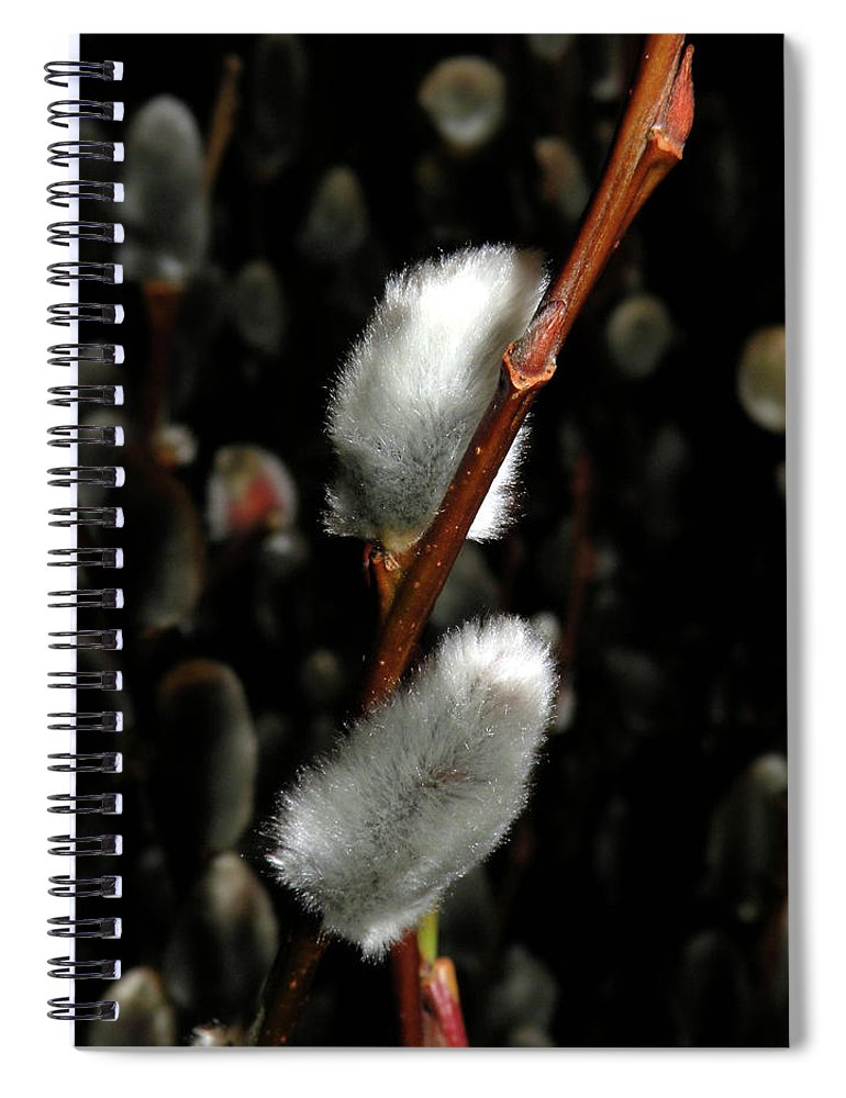 Pussy Willow Spiral Notebook featuring the photograph Willow by Trish Tritz