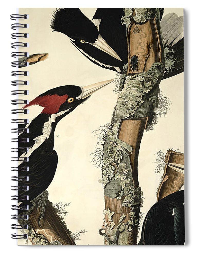 Woodpecker Spiral Notebook featuring the drawing Woodpecker by John James Audubon
