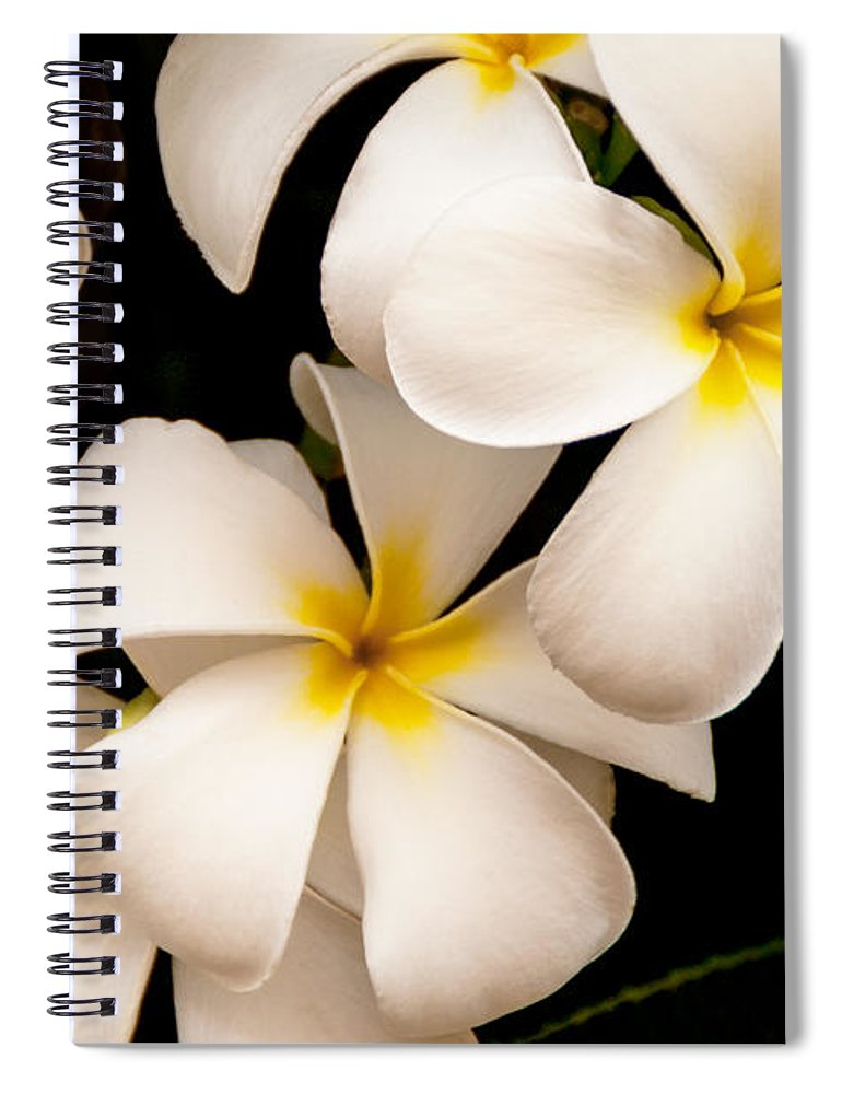Yellow And White Plumeria Flower Frangipani Spiral Notebook featuring the photograph Yellow And White Plumeria by Brian Harig