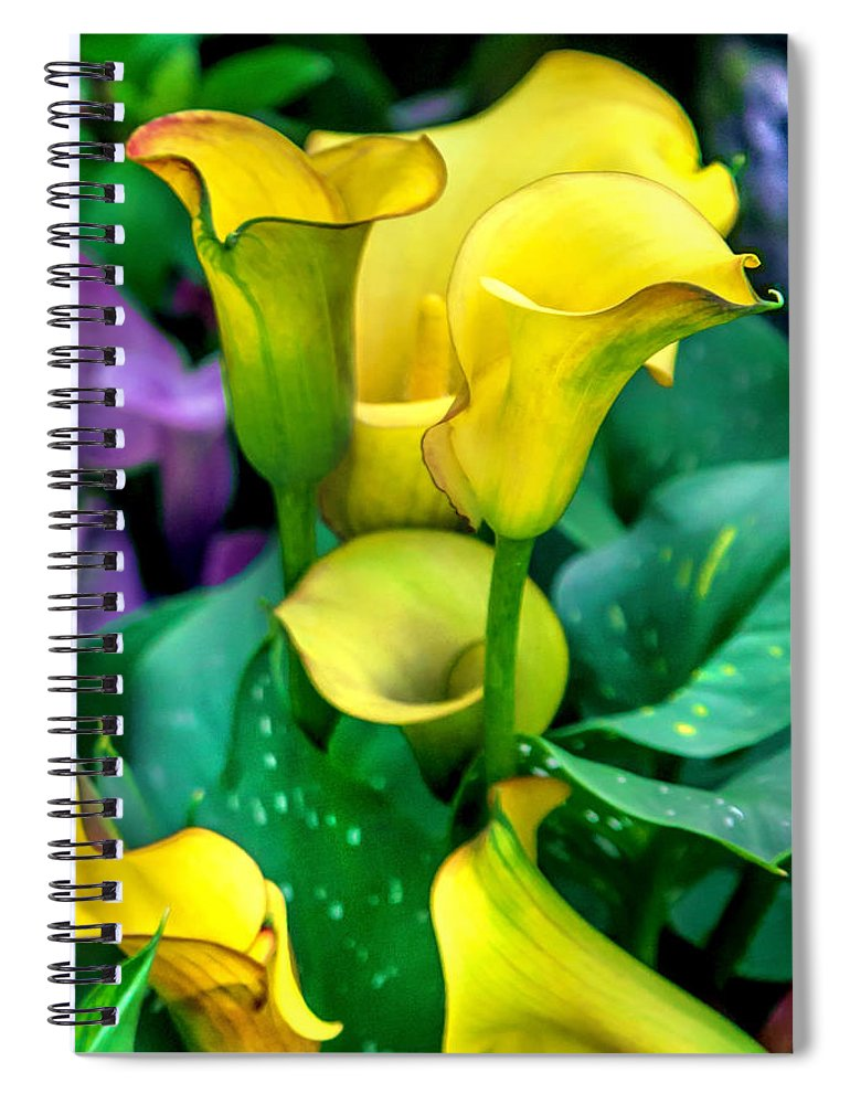 Spring Flowers Spiral Notebook featuring the photograph Yellow Calla Lilies by Az Jackson