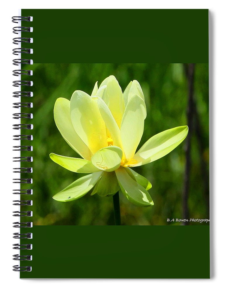 Yellow Lotus Spiral Notebook featuring the photograph Yellow Lotus by Barbara Bowen