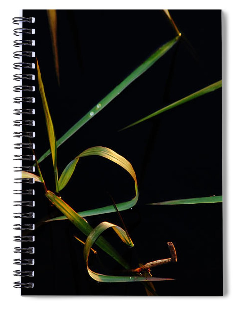 Water Spiral Notebook featuring the photograph Zen Photography by Susanne Van Hulst