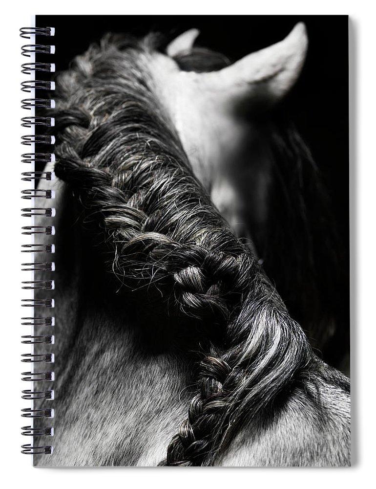 Horse Spiral Notebook featuring the photograph Braided Mane Of Grey Horse by Henrik Sorensen