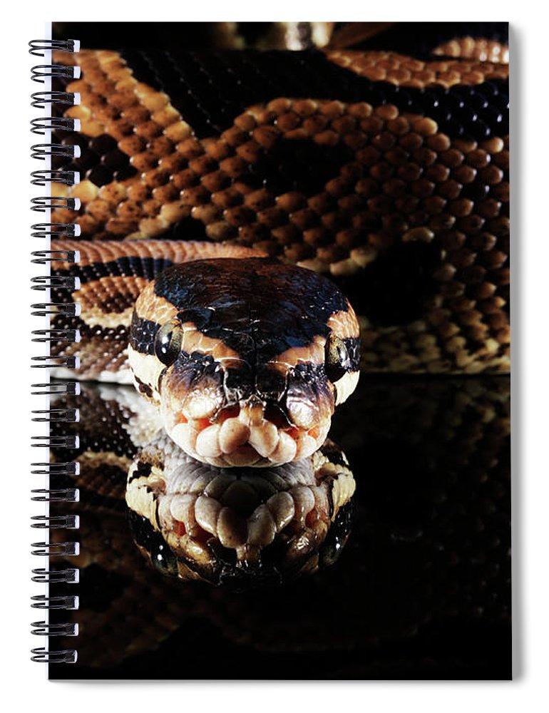Copenhagen Spiral Notebook featuring the photograph Burmese Python by Henrik Sorensen