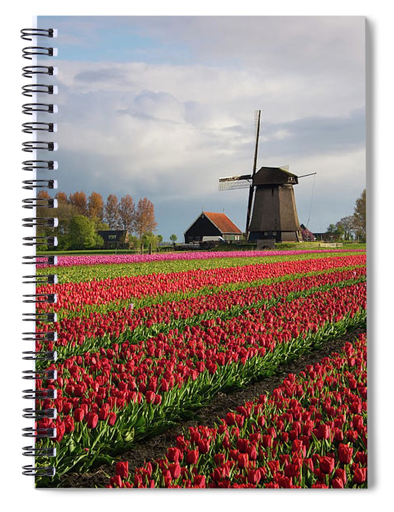 Tulips Spiral Notebook featuring the photograph Colorful rows of tulips in front of a windmill by IPics Photography