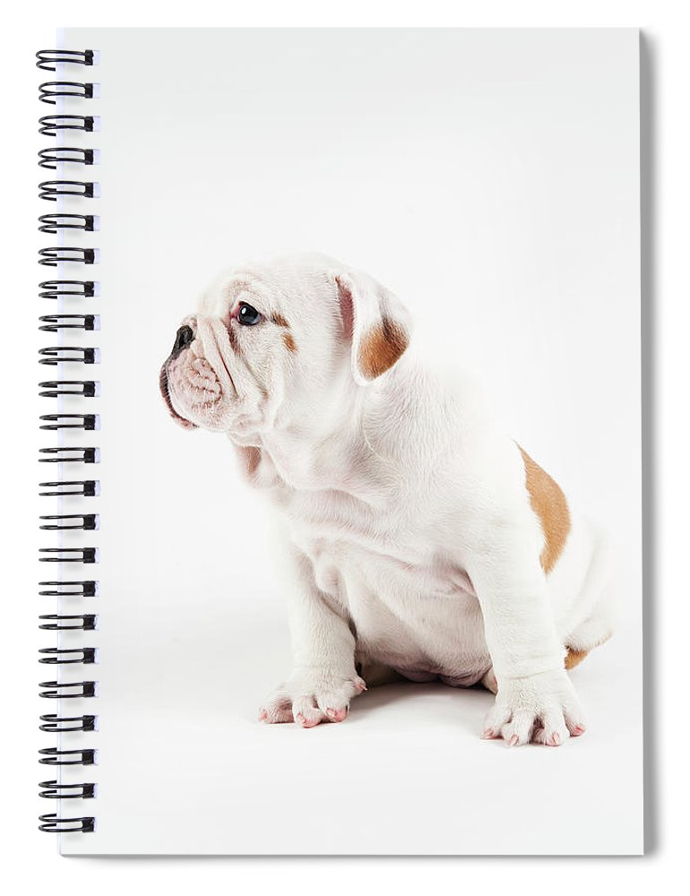 Pets Spiral Notebook featuring the photograph Cute Bulldog Puppy On White Background by Peter M. Fisher