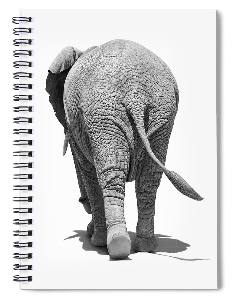 Shadow Spiral Notebook featuring the photograph Elephants Behind by Burazin