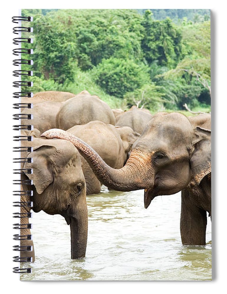 Animals In The Wild Spiral Notebook featuring the photograph Elephants In River by Lp7
