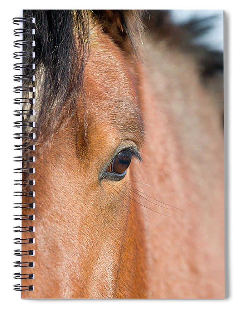Horse Spiral Notebook featuring the photograph Equine Beauty by Dageldog