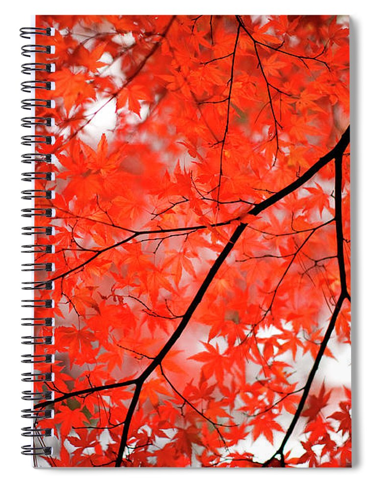 Tranquility Spiral Notebook featuring the photograph Fall Colors In Japan by Jdphotography
