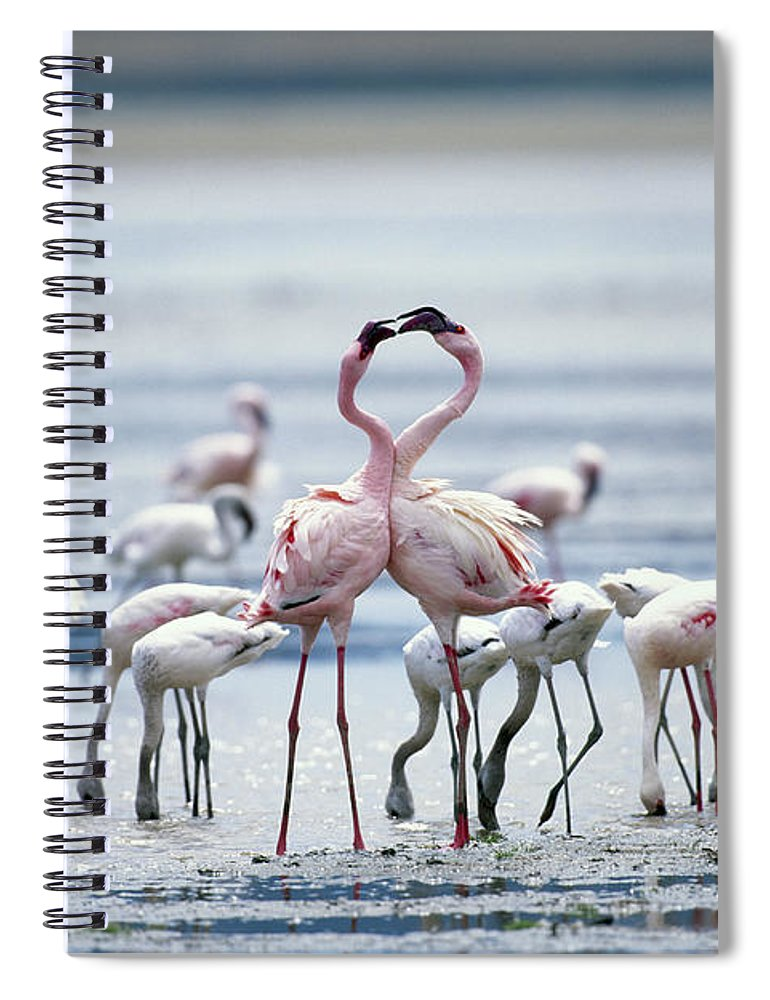 Tanzania Spiral Notebook featuring the photograph Lesser Flamingoes Phoeniconaias Minor by Paul Souders
