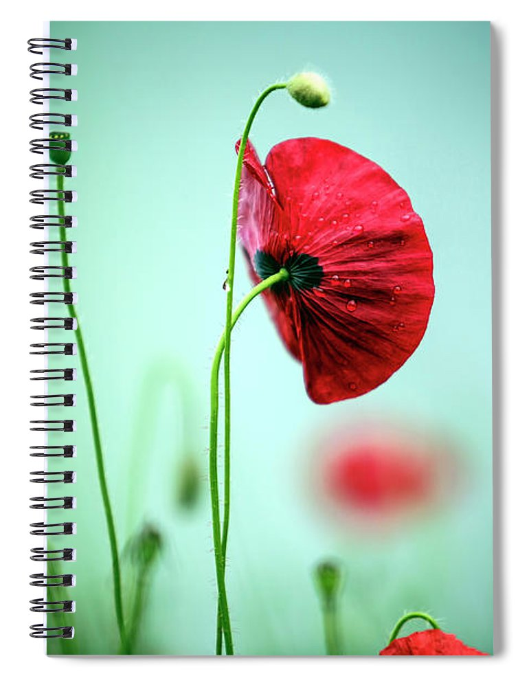 Poppy Spiral Notebook featuring the photograph Morning Poppy Flower by Nailia Schwarz