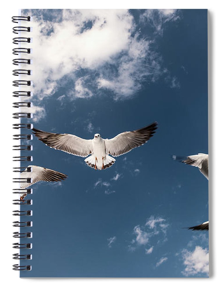 Animal Themes Spiral Notebook featuring the photograph Myanmar, Inle Lake, Seagulls Inflight by Martin Puddy