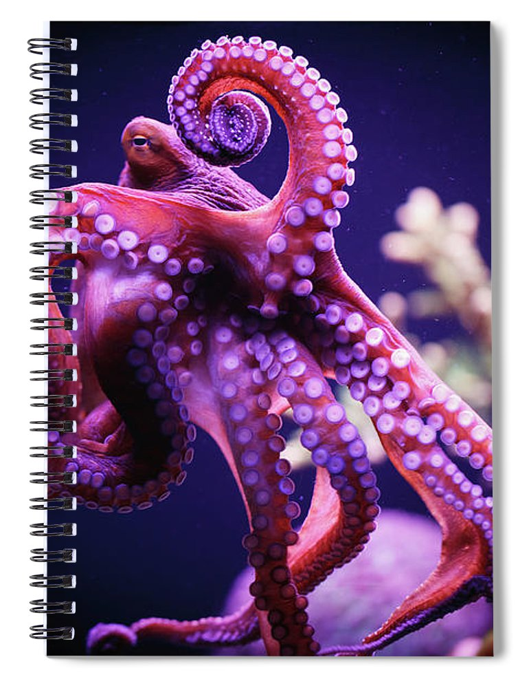 Underwater Spiral Notebook featuring the photograph Octopus by Reynold Mainse / Design Pics