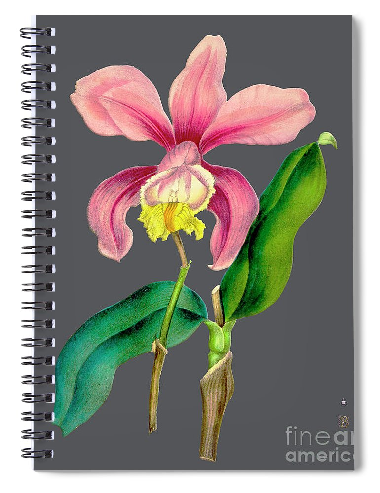 Vintage Spiral Notebook featuring the digital art Orchid Old Print by Baptiste Posters