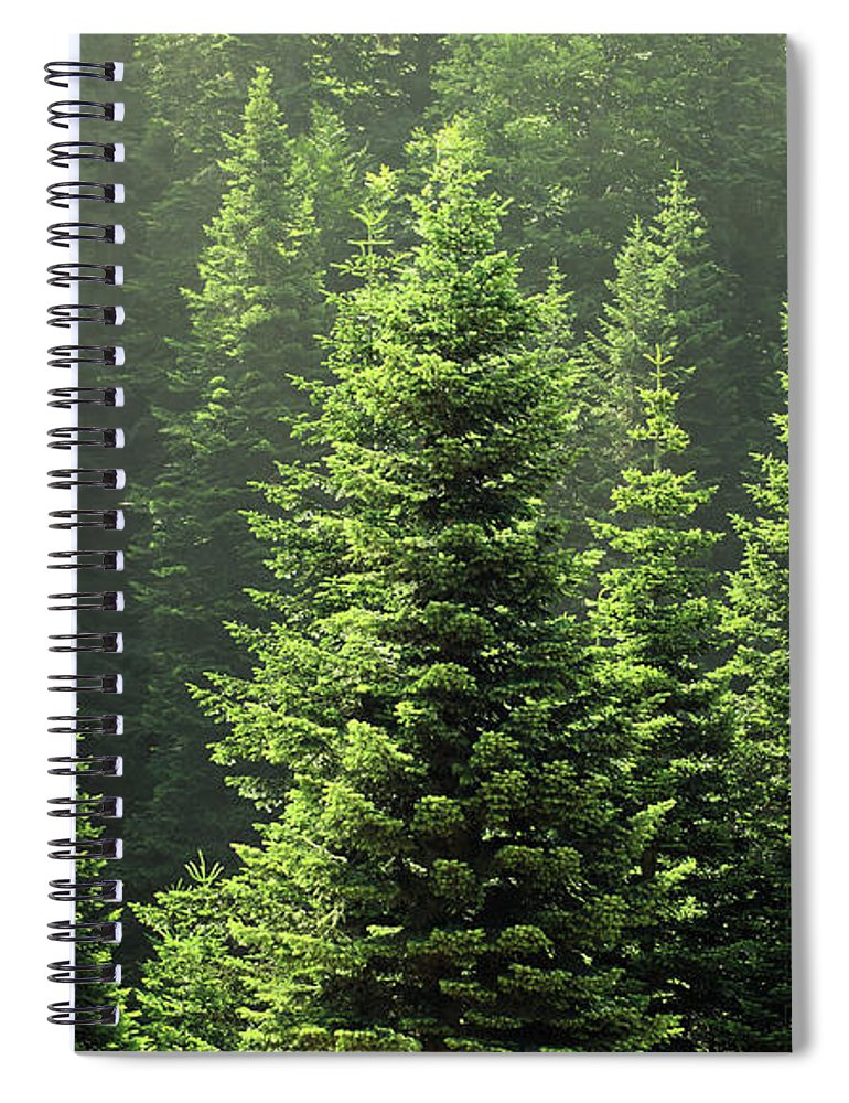 Scenics Spiral Notebook featuring the photograph Pine Tree by Petekarici