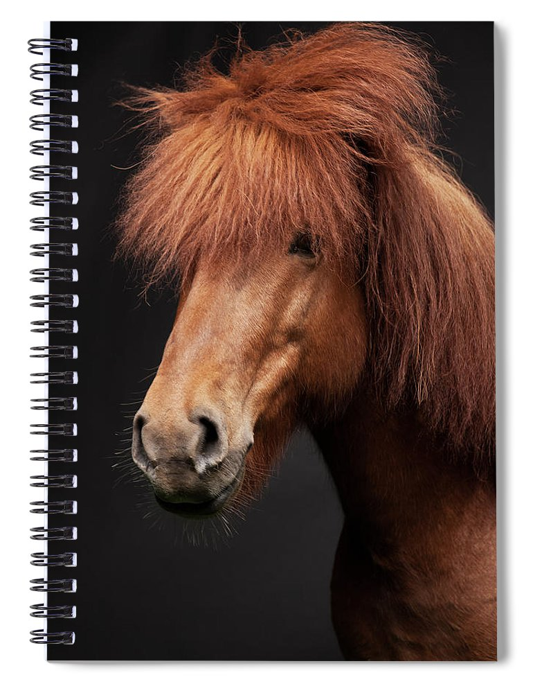 Horse Spiral Notebook featuring the photograph Portrait Of Horse by Arctic-images