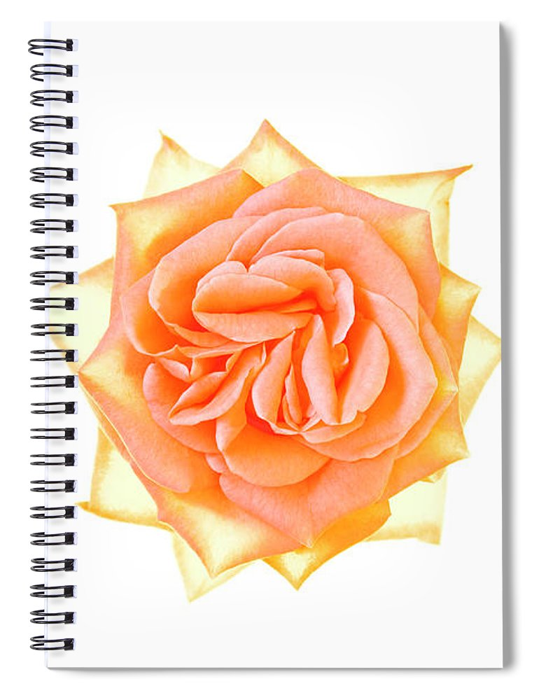 Orange Color Spiral Notebook featuring the photograph Rose Flower by Nicholas Rigg