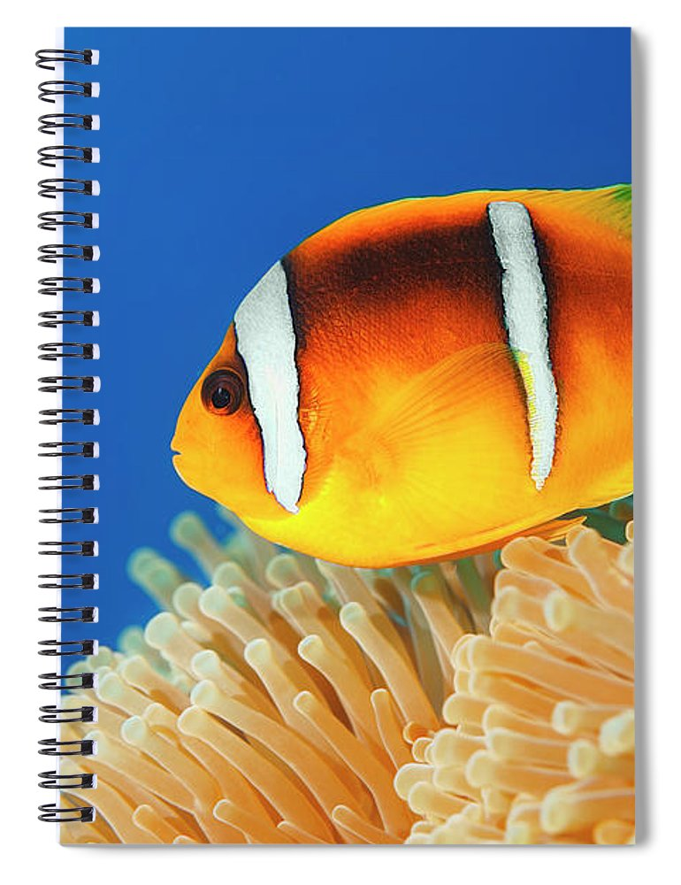 Underwater Spiral Notebook featuring the photograph Sea Life - Anemone Clownfish by Ultramarinfoto