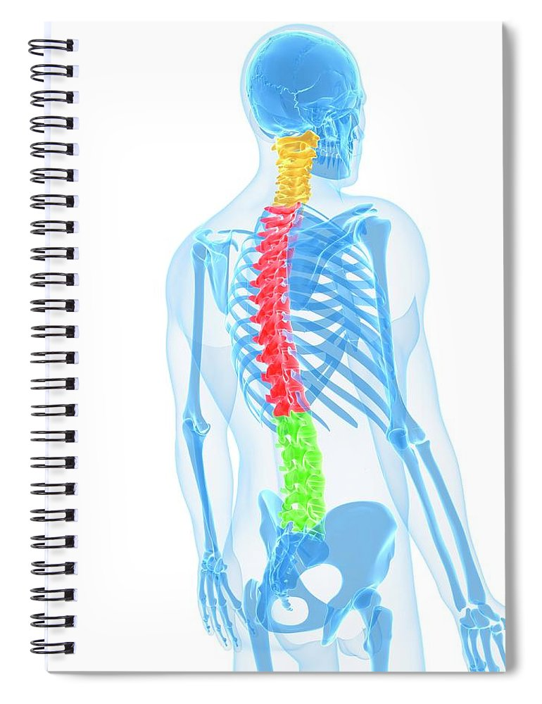 White Background Spiral Notebook featuring the digital art Spine, Artwork by Sciepro