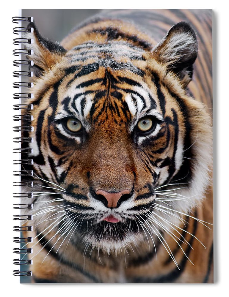Snow Spiral Notebook featuring the photograph Tiger by Freder
