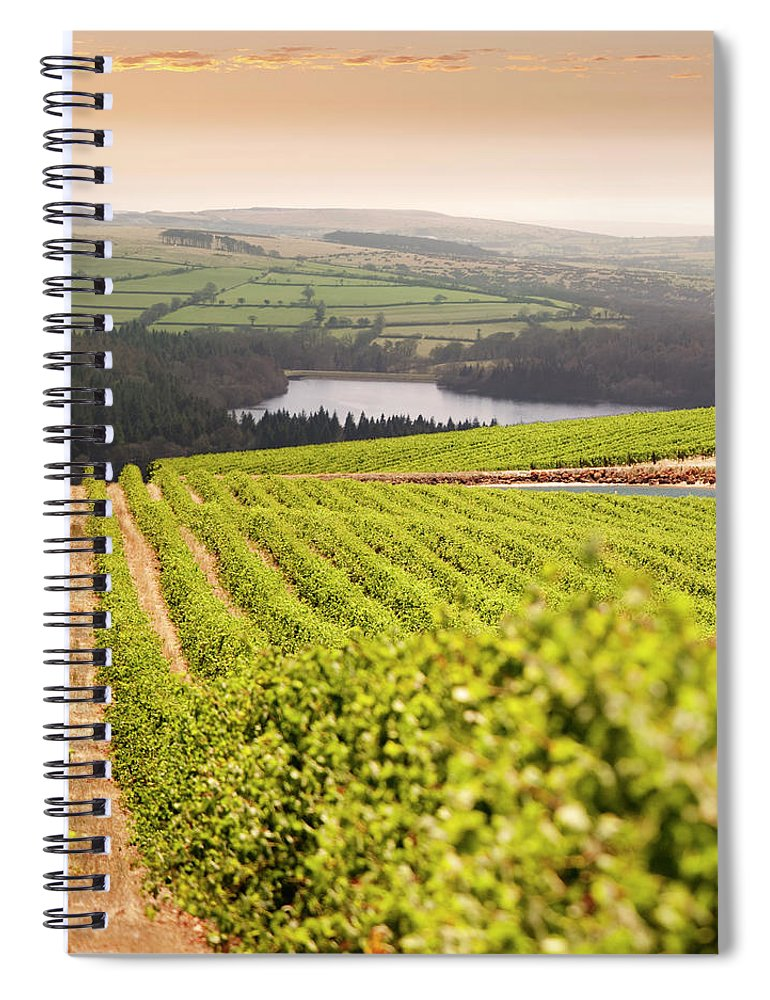 Scenics Spiral Notebook featuring the photograph Vineyard At Sunset by Lockiecurrie