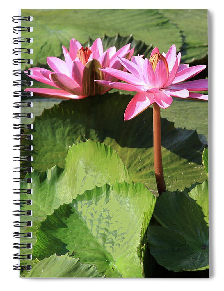 Water Lilies Spiral Notebook featuring the photograph Water Lilies in Sunlight by John Lautermilch