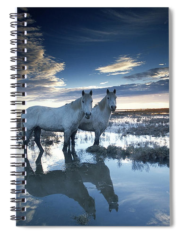 Horse Spiral Notebook featuring the photograph Wild Horses Equus Caballus, France by Art Wolfe