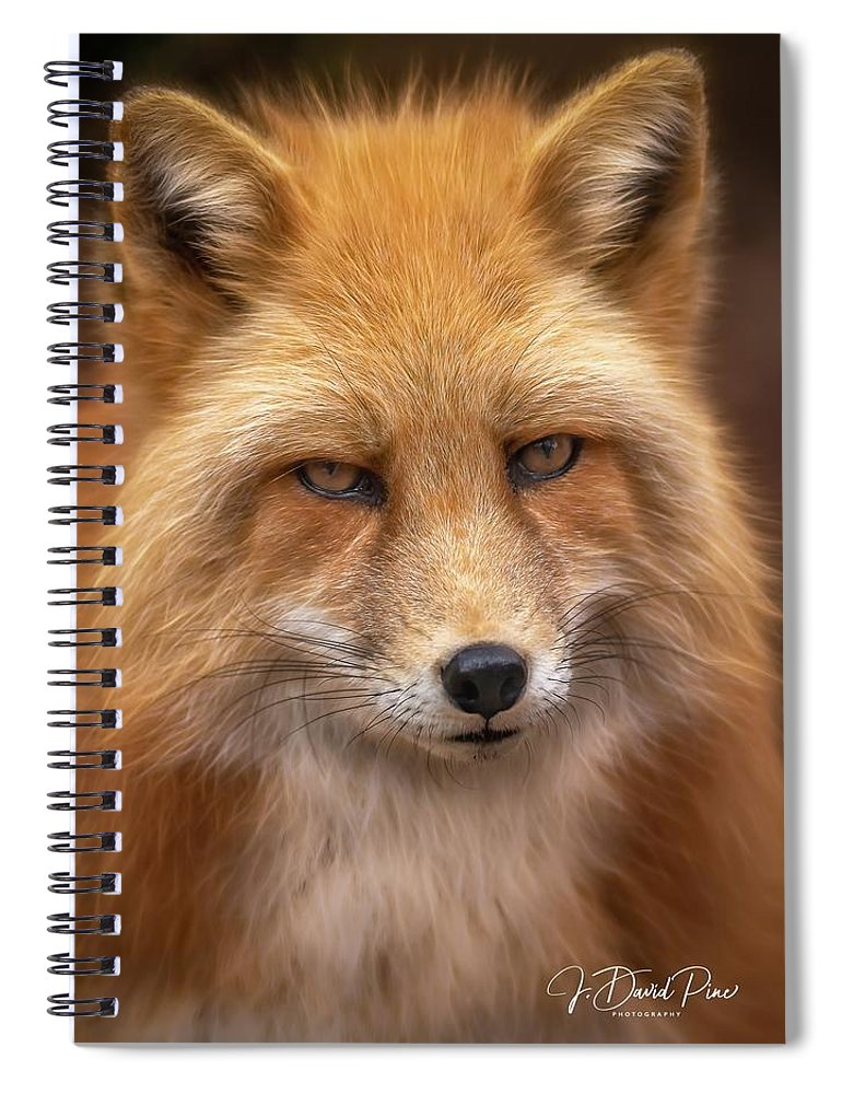 Russianredfox Spiral Notebook featuring the photograph Russian Red Fox by David Pine