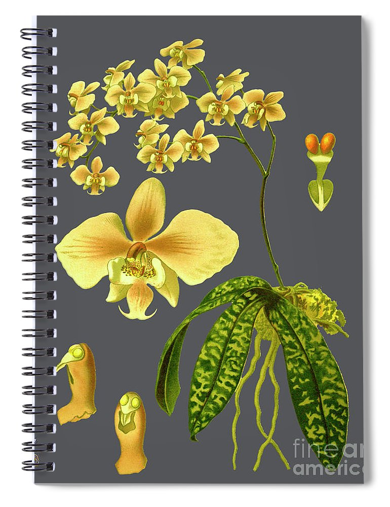 Vintage Spiral Notebook featuring the mixed media Orchid Old Print by Baptiste Posters