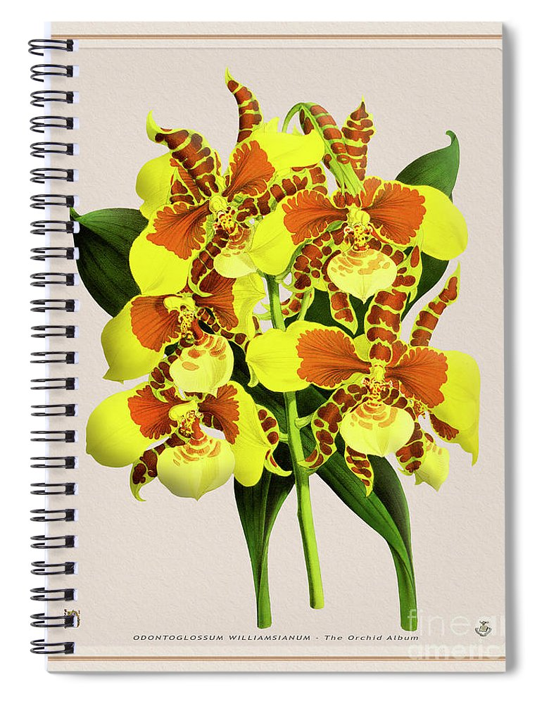 Vintage Spiral Notebook featuring the drawing Orchid Vintage Print On Tinted Paperboard by Baptiste Posters