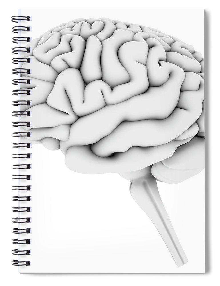 White Background Spiral Notebook featuring the digital art Brain, Artwork by Pasieka