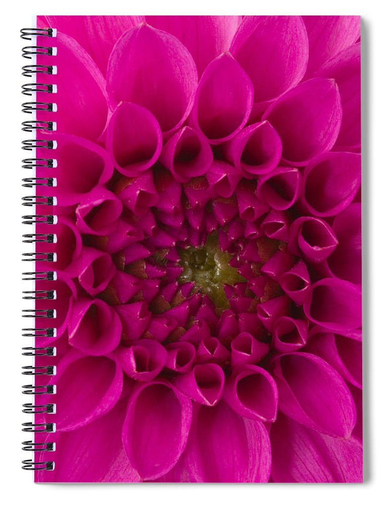 Saturated Color Spiral Notebook featuring the photograph Dahlia by Vidok