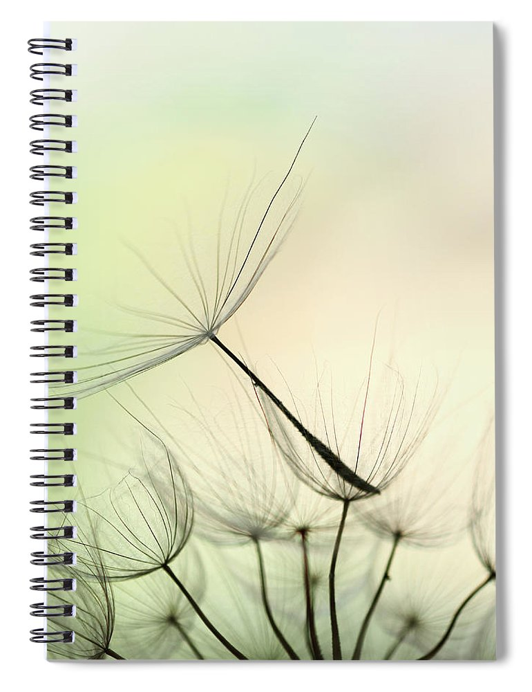 Single Flower Spiral Notebook featuring the photograph Dandelion Seed by Jasmina007
