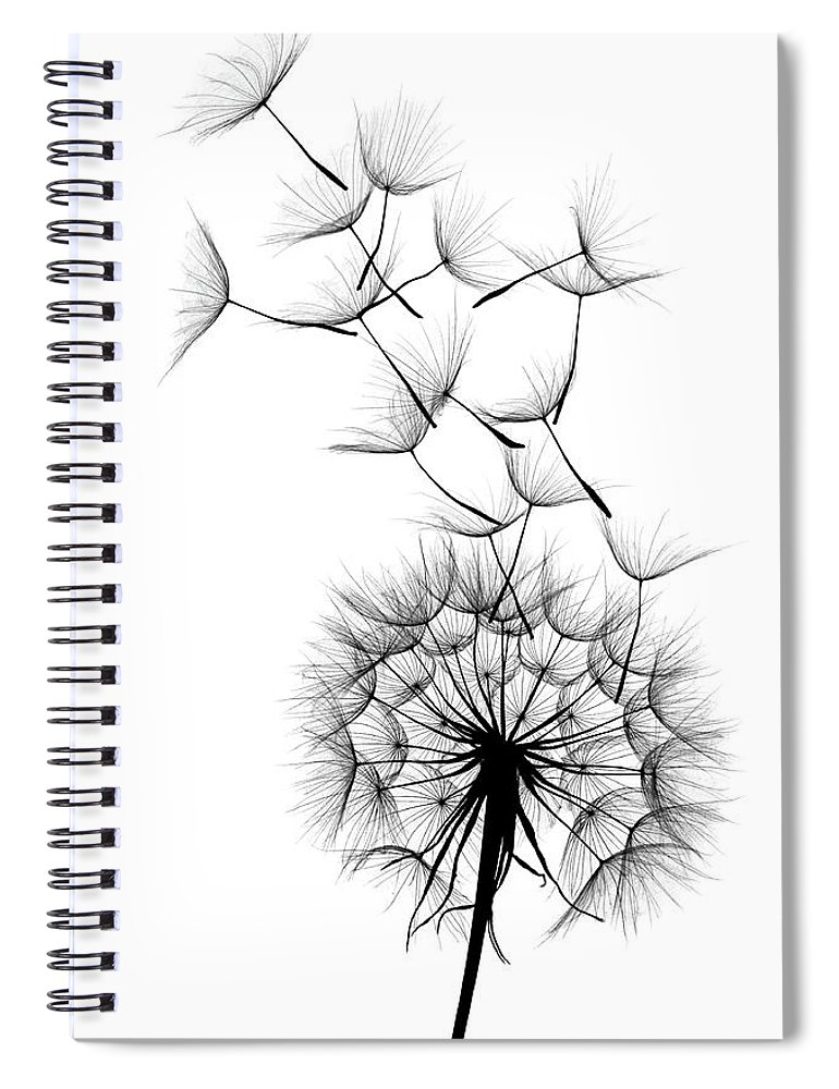 Wind Spiral Notebook featuring the photograph Dandelion by Sunnybeach