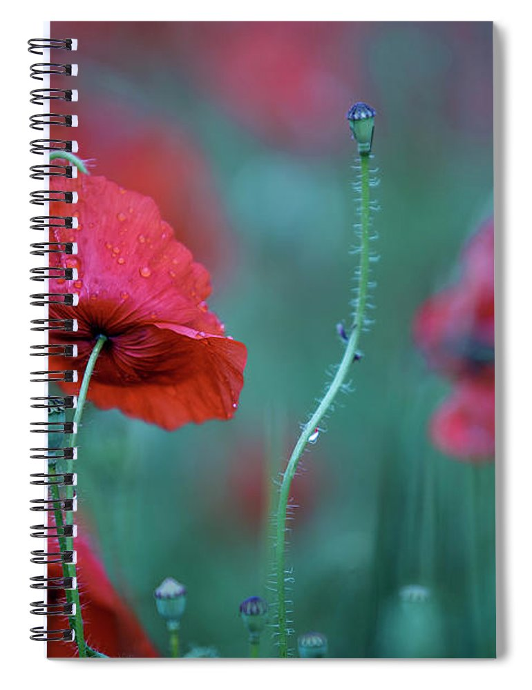 Poppy Spiral Notebook featuring the photograph Red Corn Poppy Flowers by Nailia Schwarz
