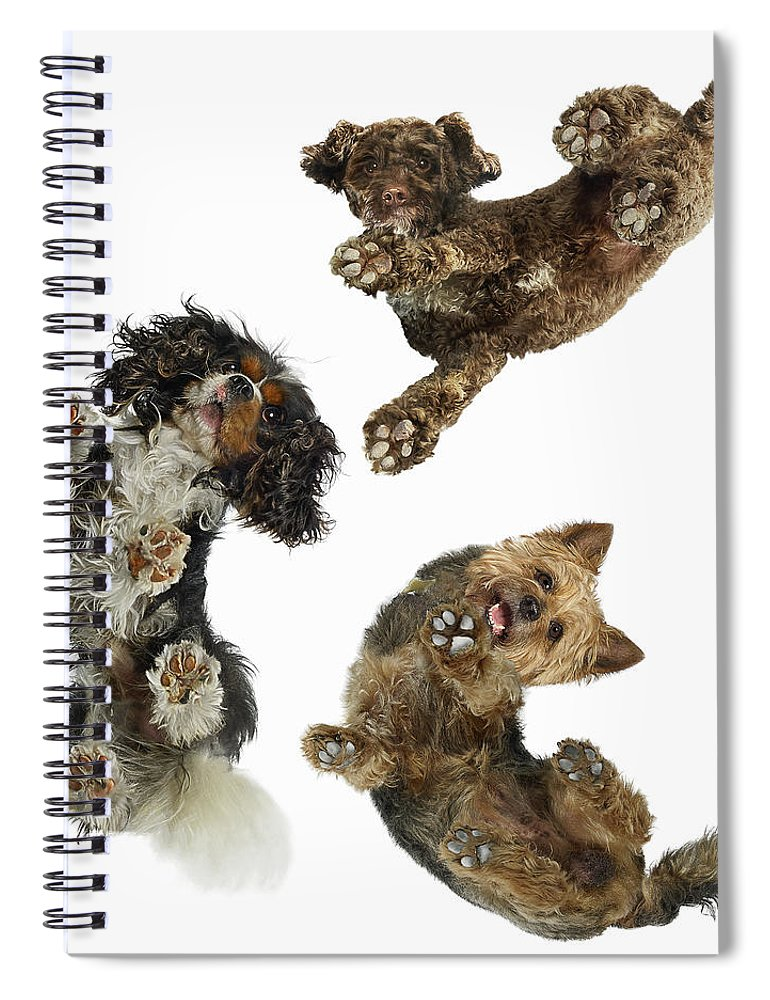 White Background Spiral Notebook featuring the photograph 3 Dogs Looking Down by Gandee Vasan