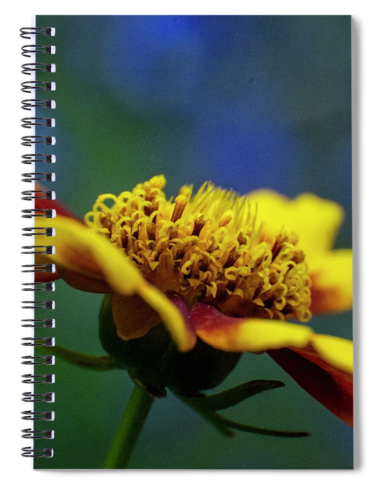 Rudbeckia Spiral Notebook featuring the mixed media Rudbeckia by Smart Aviation