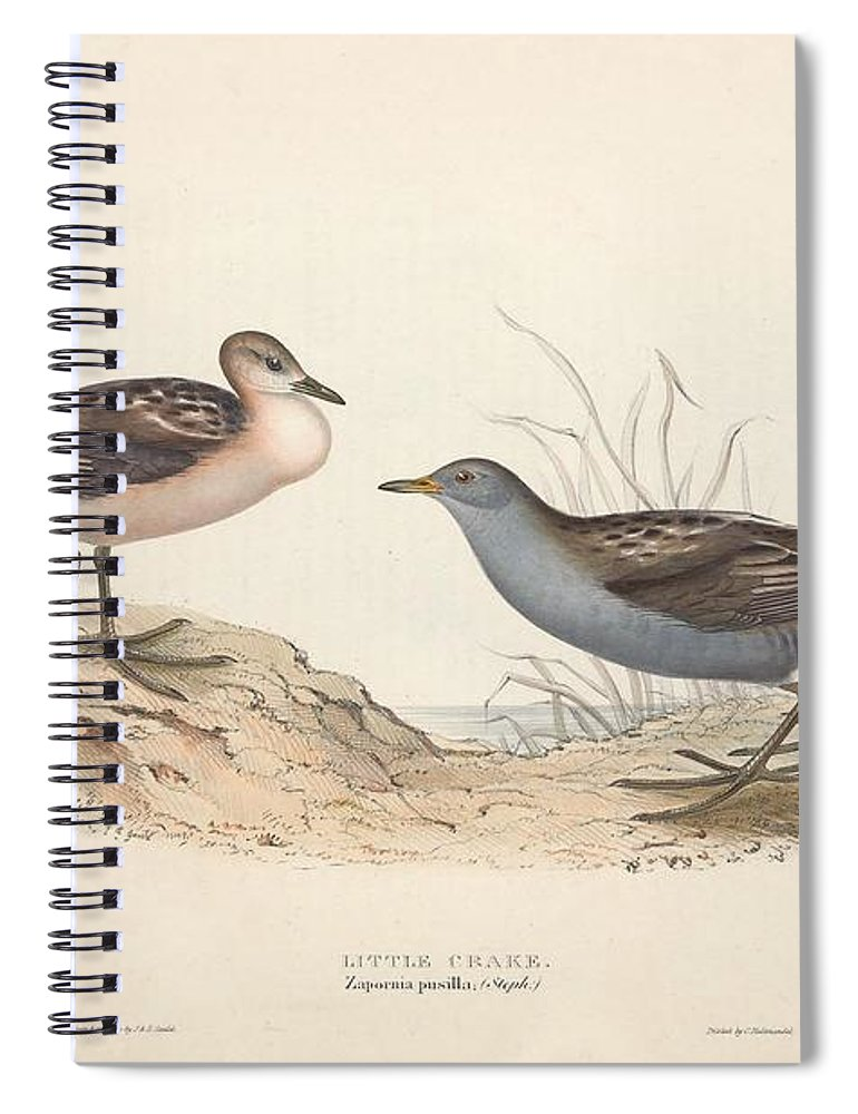 Nature Spiral Notebook featuring the painting Different Types Of Birds Illustrated By Charles Dessalines D Orbigny 1806-1876 21 83 by Charles Dessalines D Orbigny