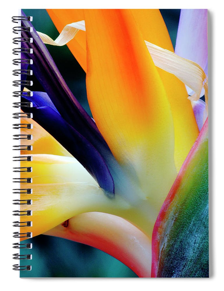 Banana Tree Spiral Notebook featuring the photograph A Close-up Of A Flower Of A Bird Of by Eromaze