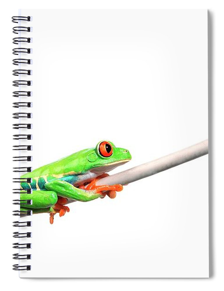 Rope Spiral Notebook featuring the photograph A Frog Hanging On by Design Pics/corey Hochachka