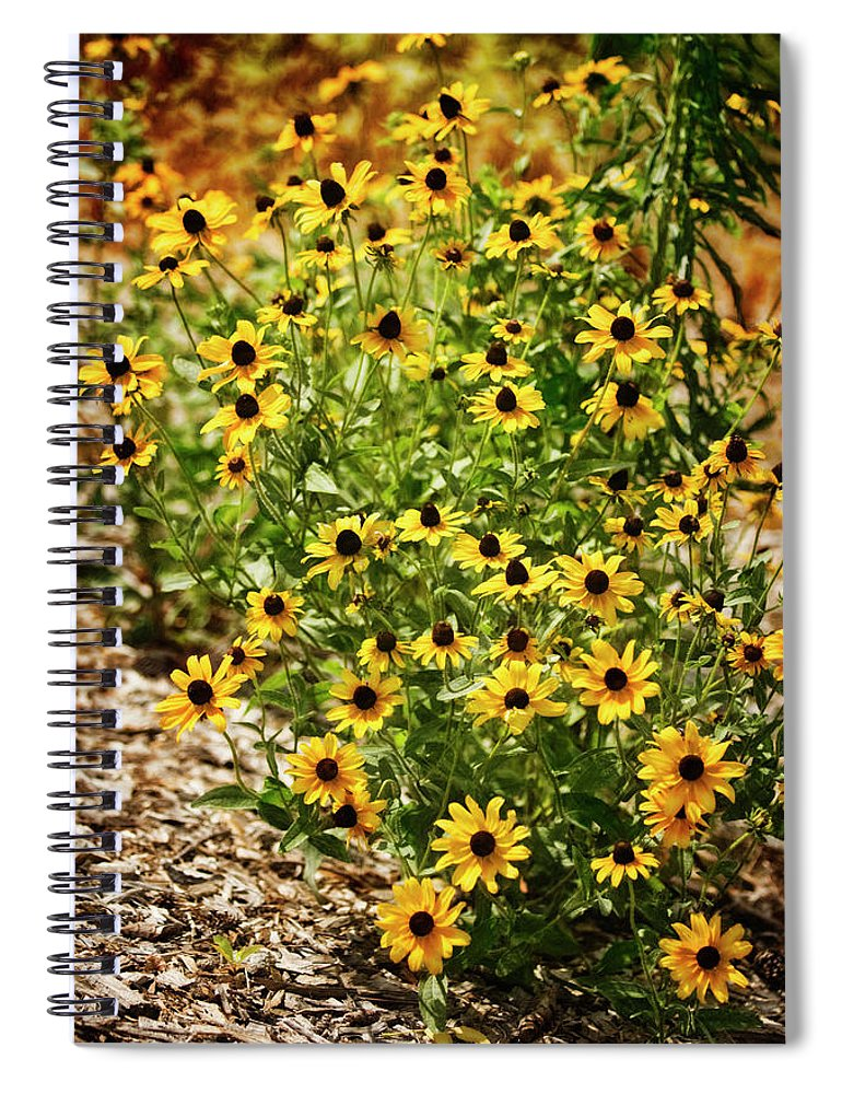 Rockville Spiral Notebook featuring the photograph A Group Of Bossoming Black-eyed Susans by Maria Mosolova