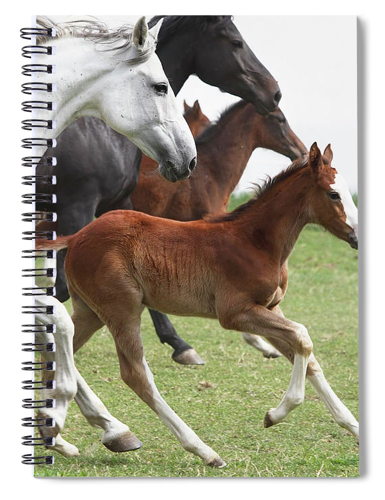 Horse Spiral Notebook featuring the photograph A Group Of Galloping Horses In An Open by Somogyvari