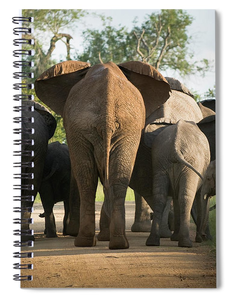 Cow Spiral Notebook featuring the photograph A Herd Of Elephants Heading Away From Us by Jono0001