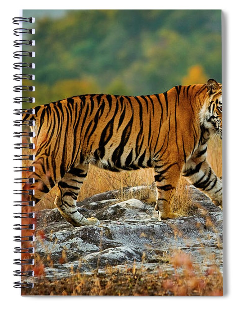 Vertebrate Spiral Notebook featuring the photograph A Large Tiger In Bandhavgarh National by Mint Images - Art Wolfe