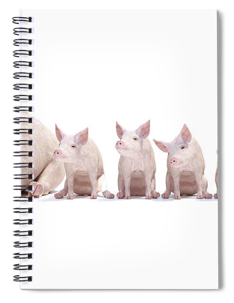 Pig Spiral Notebook featuring the digital art Adorable Little Family by Betsy Knapp