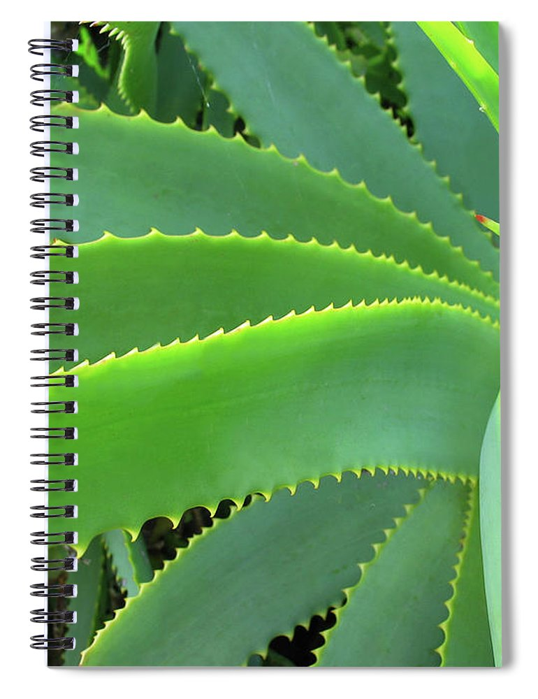 Natural Pattern Spiral Notebook featuring the photograph Aloe Vera - Healing Plant by Lubilub
