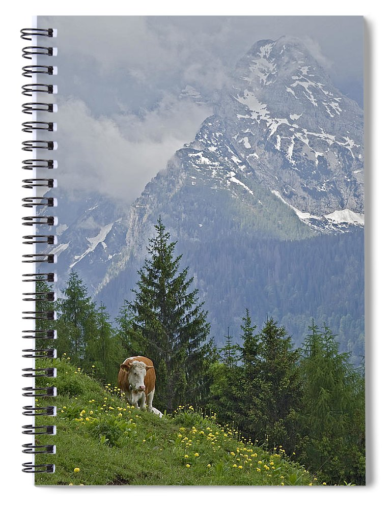 Working Animal Spiral Notebook featuring the photograph Alpine Cow by Photograph Taken By Nicholas James Mccollum