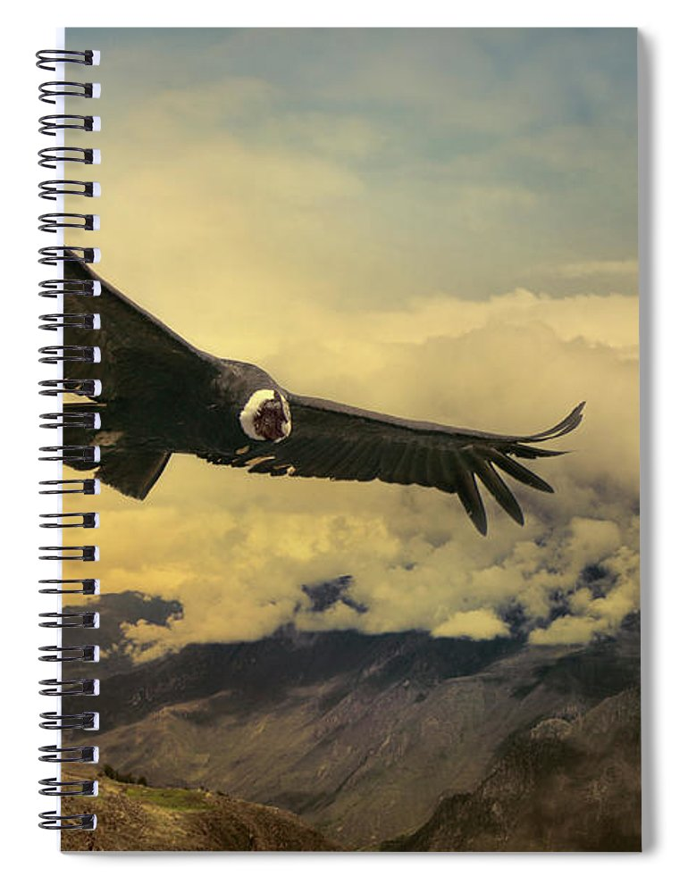 Animal Themes Spiral Notebook featuring the photograph Andean Condor by Istvan Kadar Photography