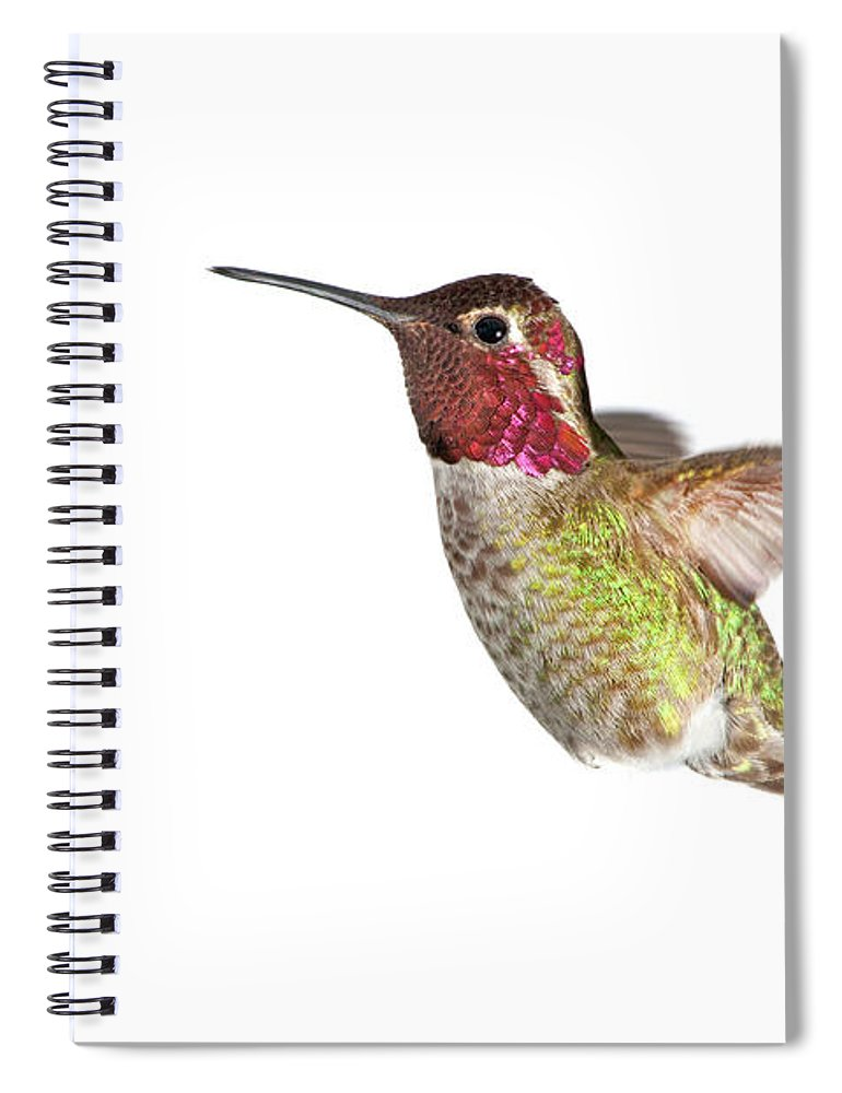 Hanging Spiral Notebook featuring the photograph Annas Hummingbird - Male, White by Birdimages